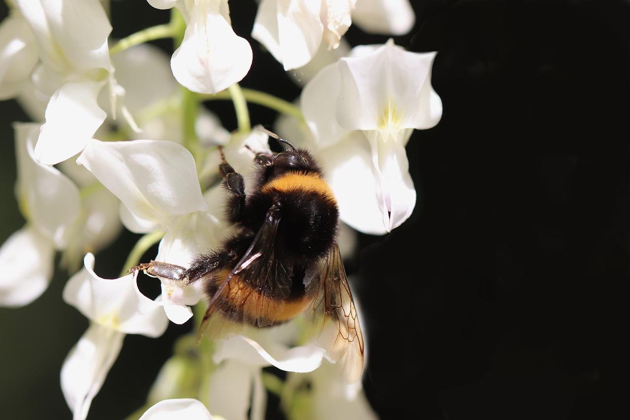 Insect Hummel Fictional  - Nennieinszweidrei / Pixabay